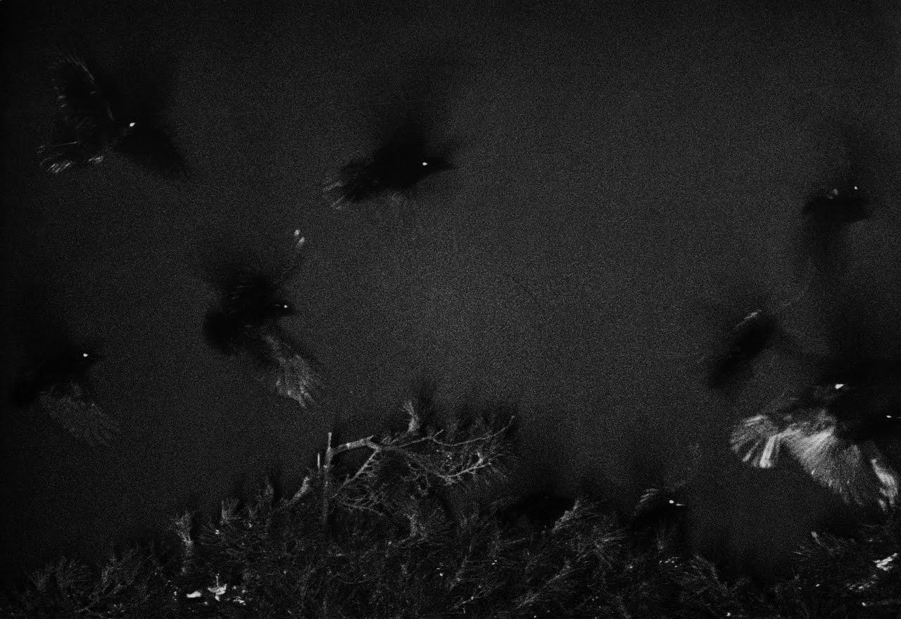 masahisa fukase -  from the series s  olitude of ravens  ,  kanazawa, 1977 -   62.5 x 52.5 cm