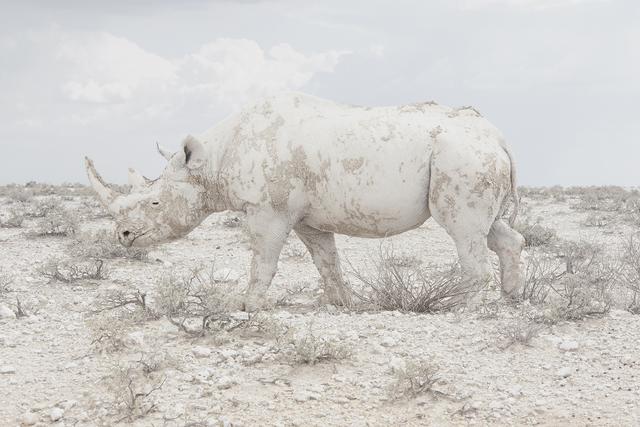 Maroesjka Lavigne - White Rhino Namibia 2015 - Robert Mann Gallery