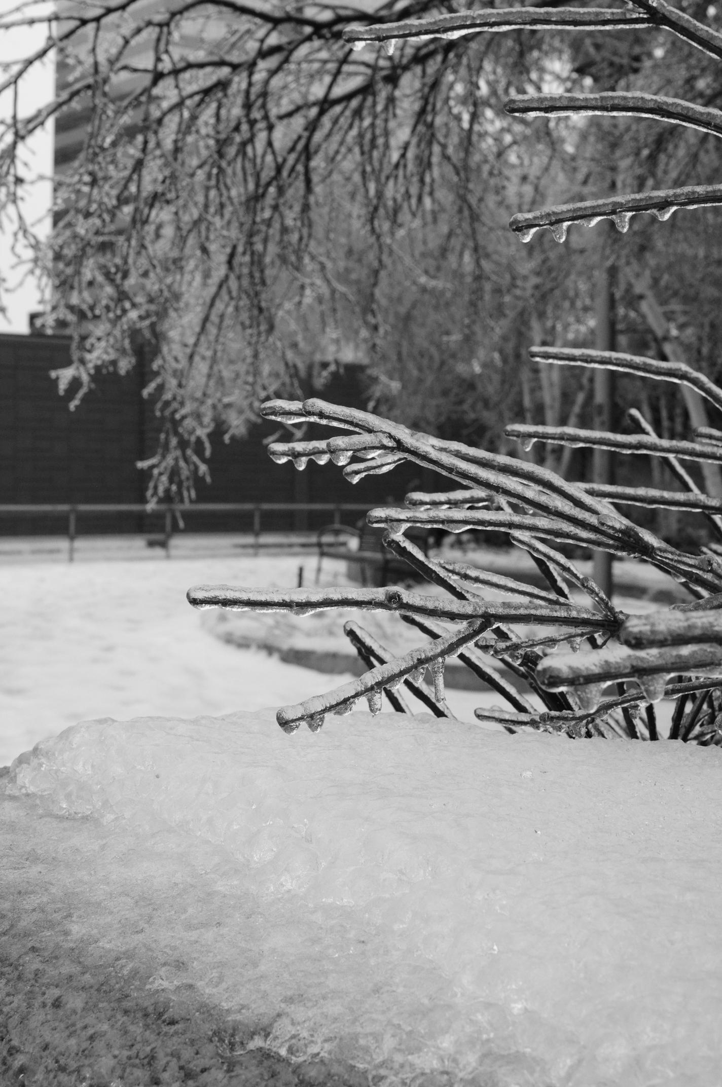 Parkette Ice Storm 2013.jpg
