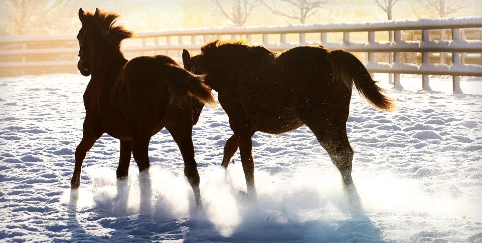 spring-water-farm-neige-november-chevaux-3.jpg