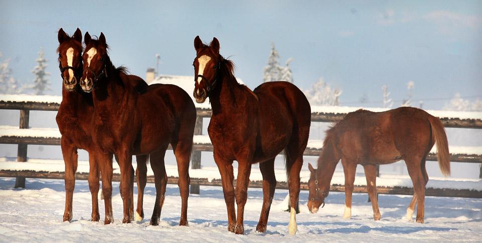 spring-water-farm-neige-november-chevaux-1.jpg