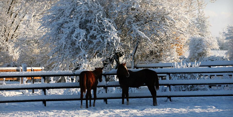 spring-water-farm-neige-november-chevaux-2.jpg