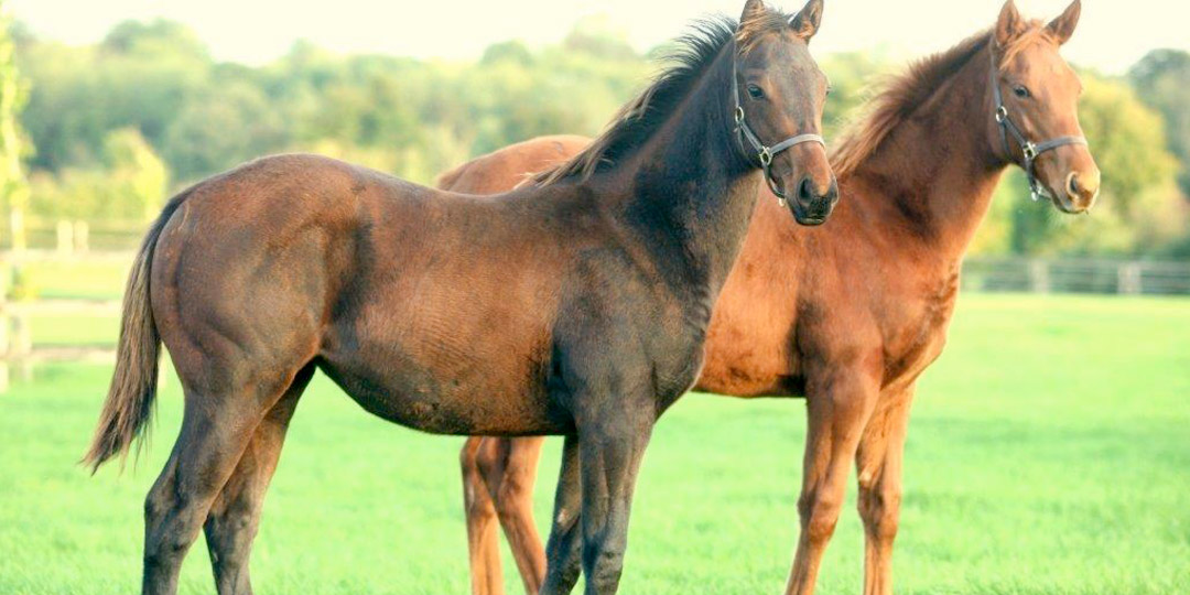 Midland Foal Syndicate 3