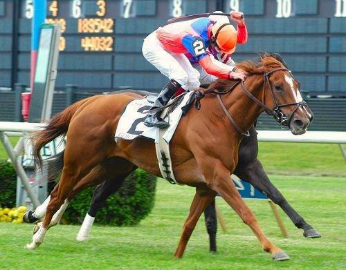 Gorella - Winner of the Beverlry D Stakes (Group 1) Bred by Xavier and Nathalie Bozo