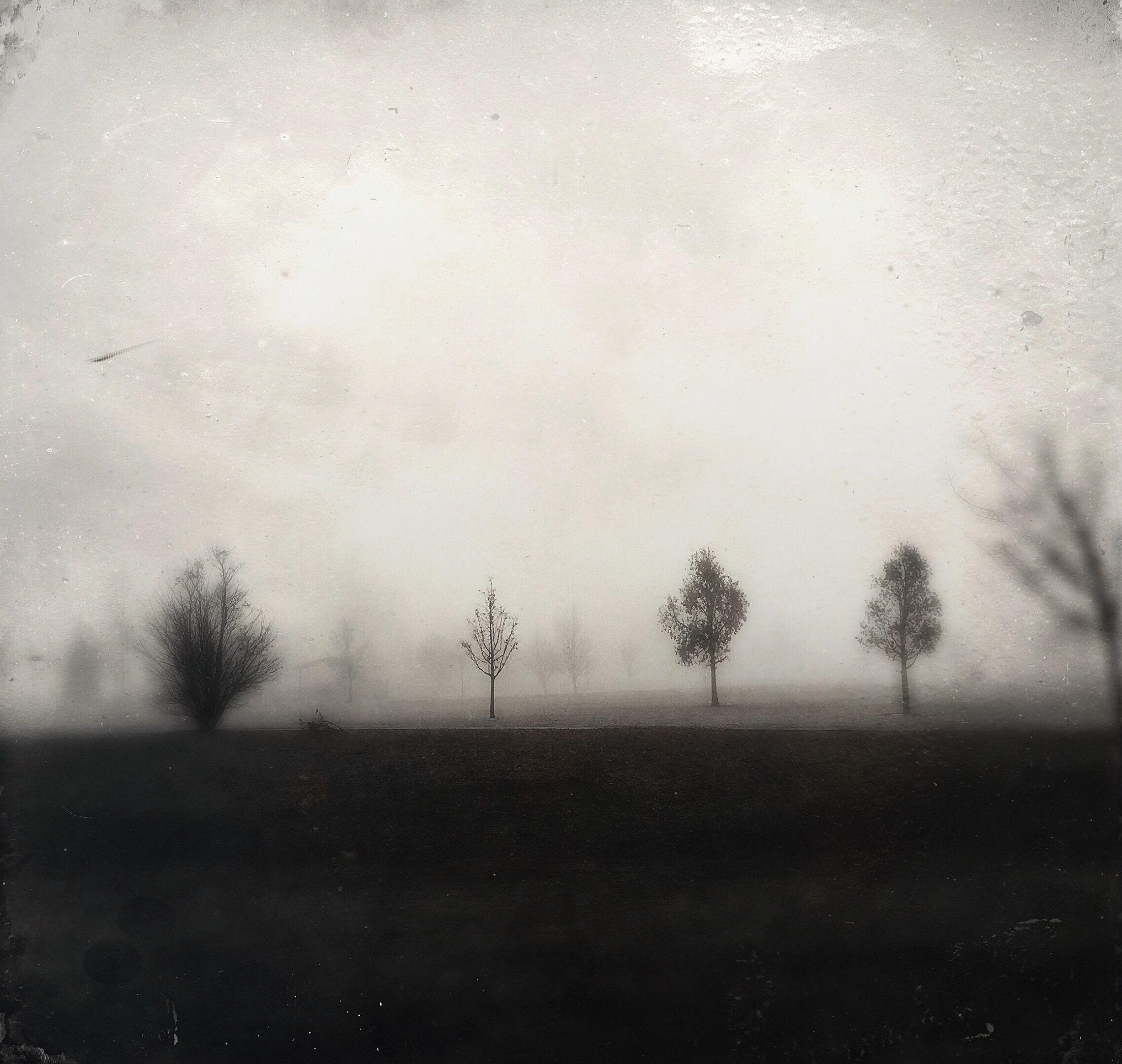 Fog | Idaho | 2015