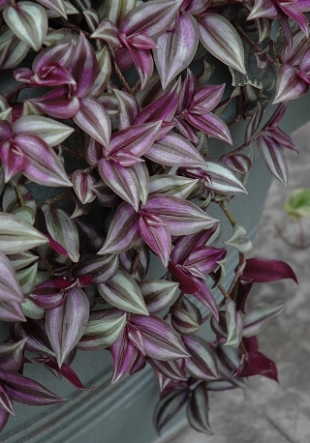 wandering jew--blog.jpg