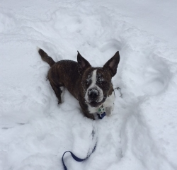 Gus snow.jpg