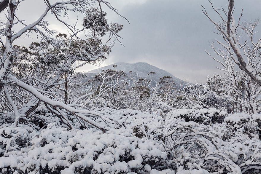 Cradle Mountain. Photograph by MIchael Wee from the book  Seven Walks .