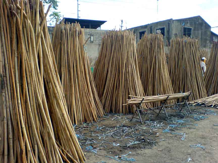 Vietnamese rattan ready for processing.