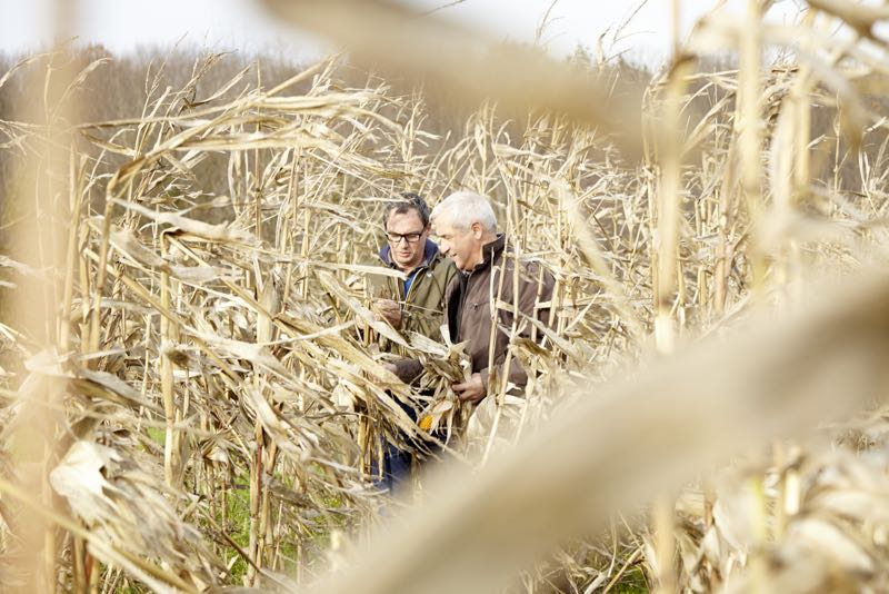 The designer of the Alki chair, Jean Louis Iratzoki, in the type of cornfield that might produce PLA.