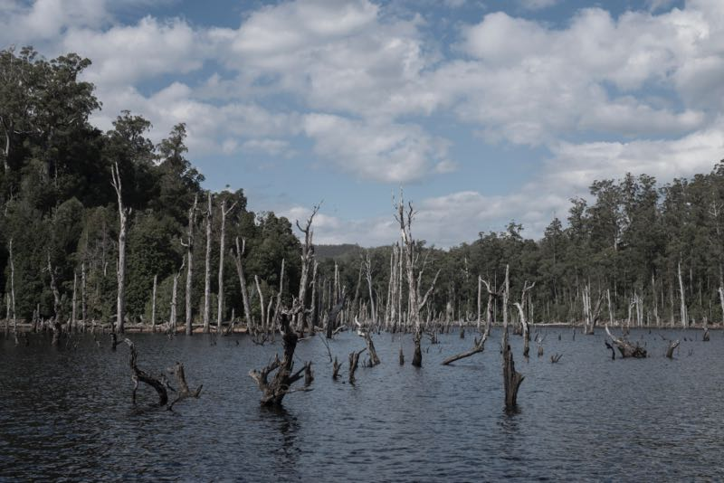A view of Lake Pieman, inland from Granville Harbour on Tasmania's remote west coast. The flooding resulted in thousands of dead trees that are now being salvaged by Hydrowood and milled for fine furniture. Photo: Chris Crerar.