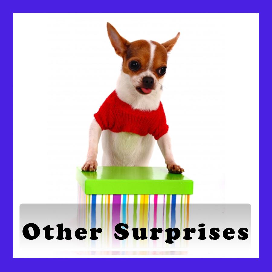 SurprisePuppy2.jpg
