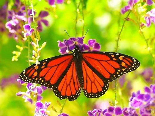 Beautiful_Butterfly.jpg