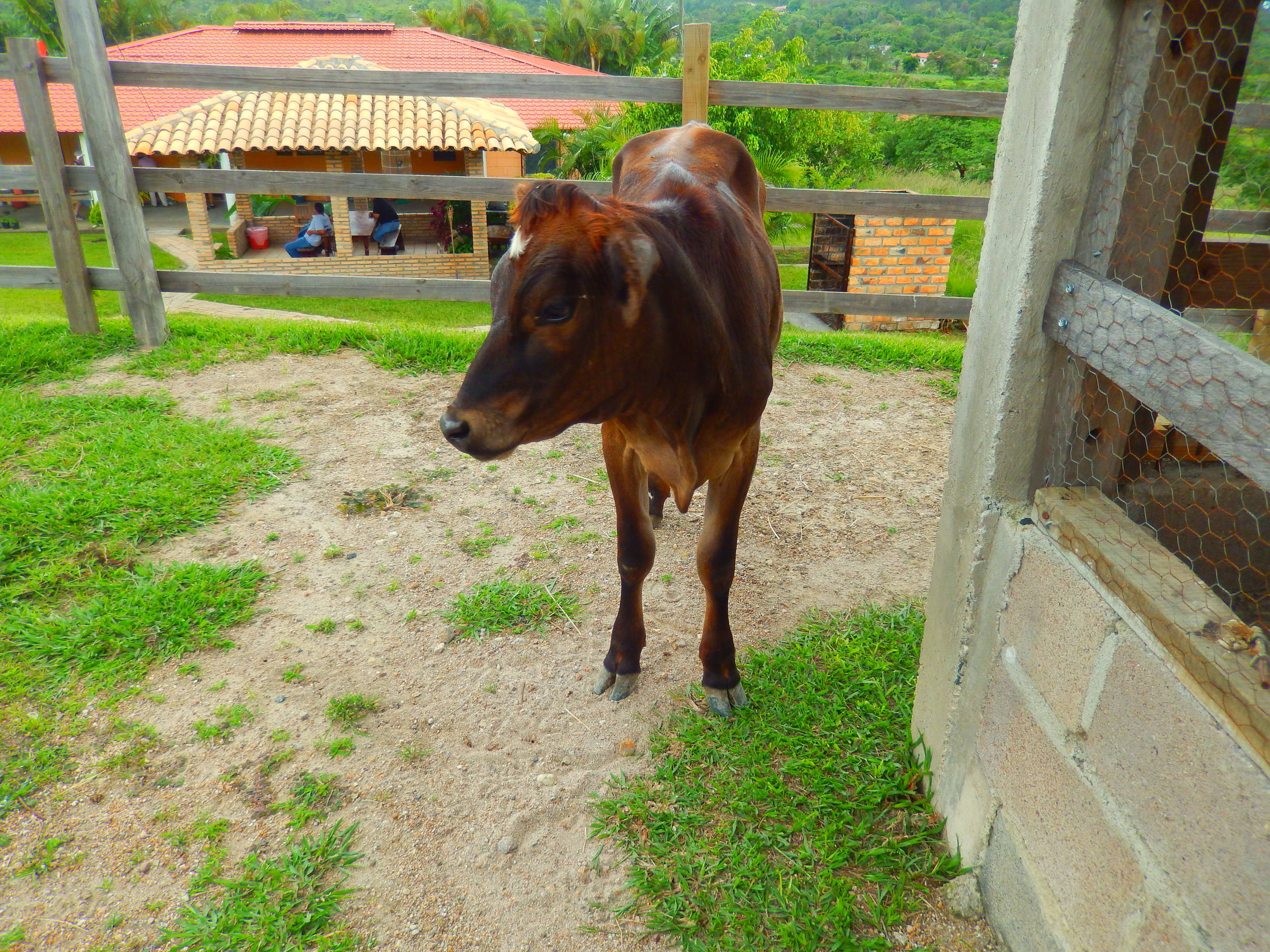 VILMA HONDURAS 163.jpg