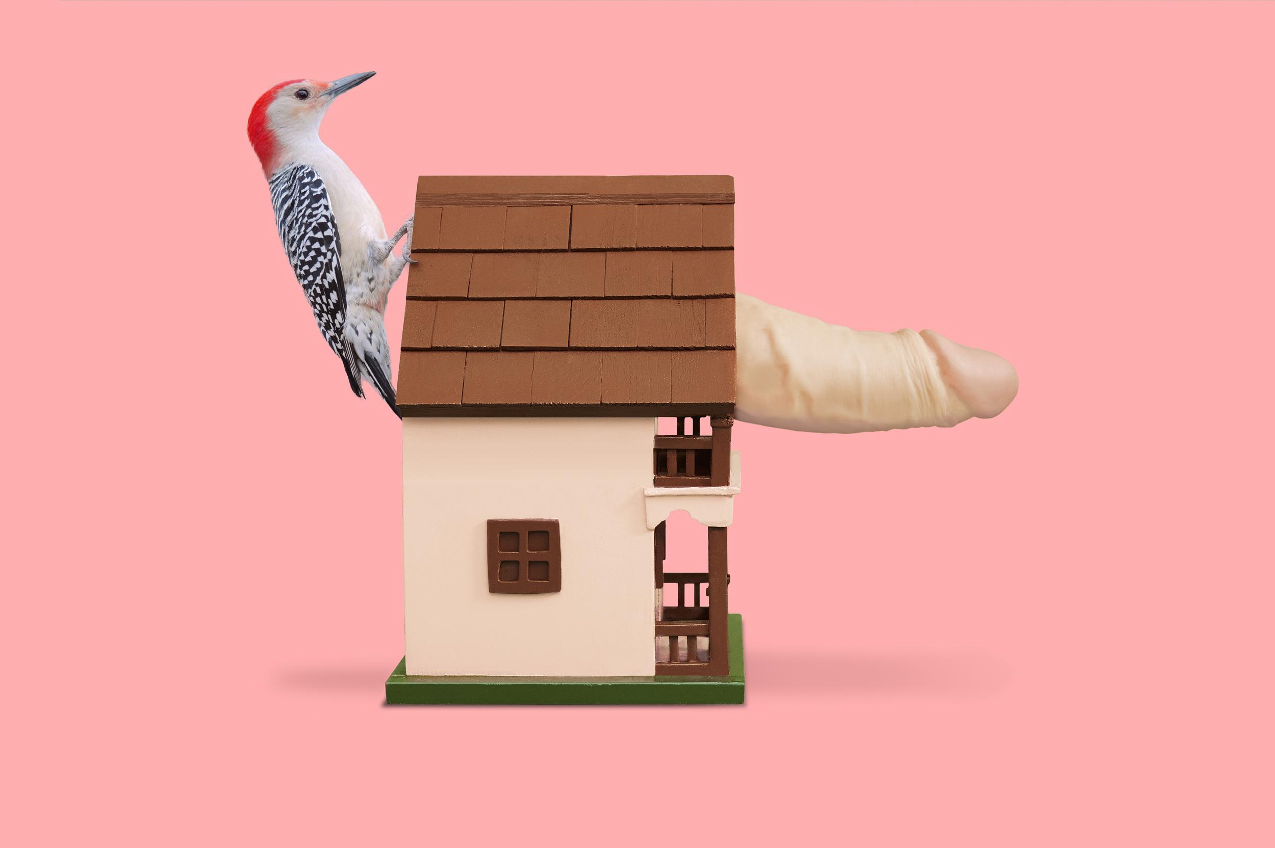 Woodpecker_Props_02_LC2 copy.jpg