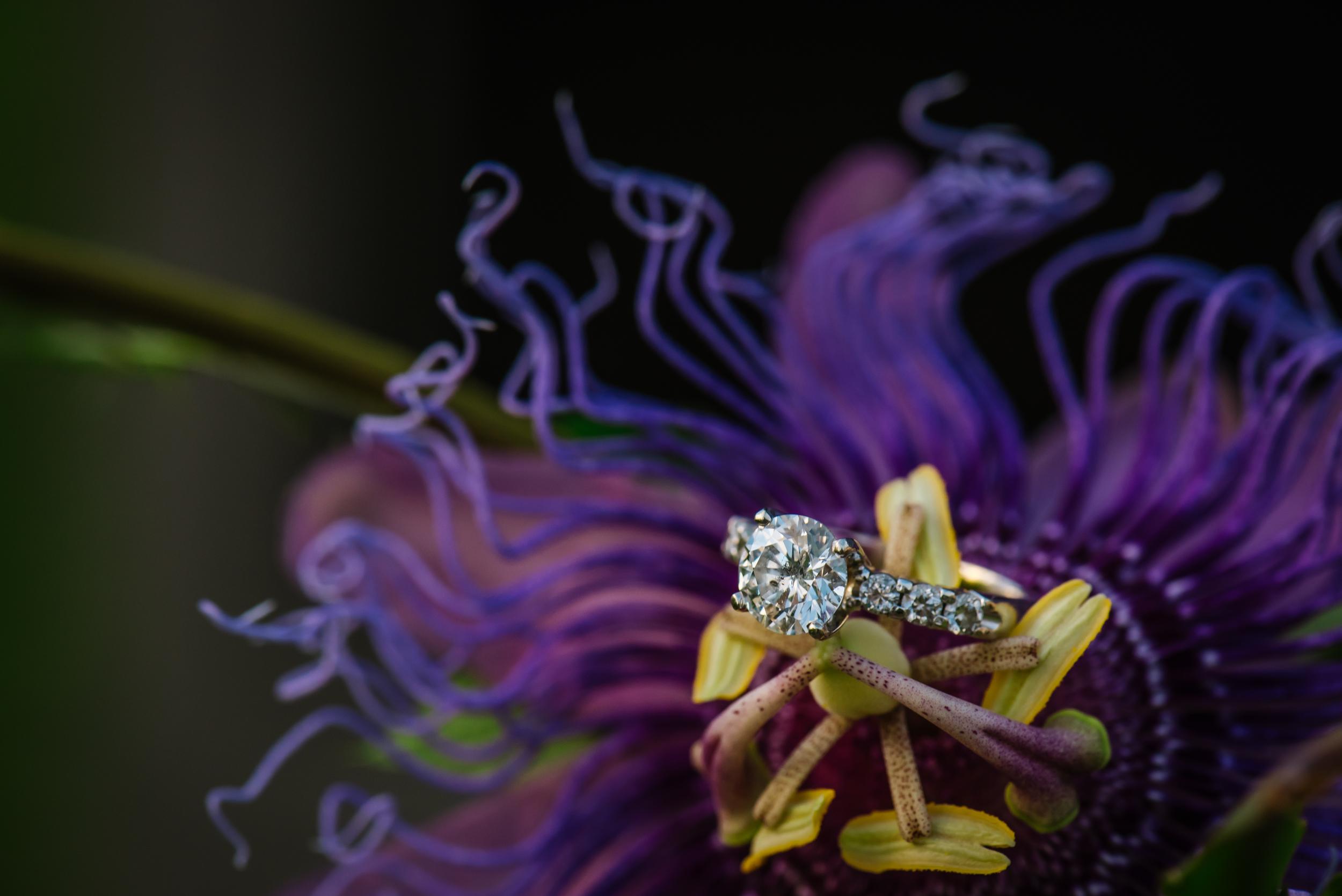 tampa-engagement-photographer-ring-purple-flower-palm-harbor-backyard-dunedin