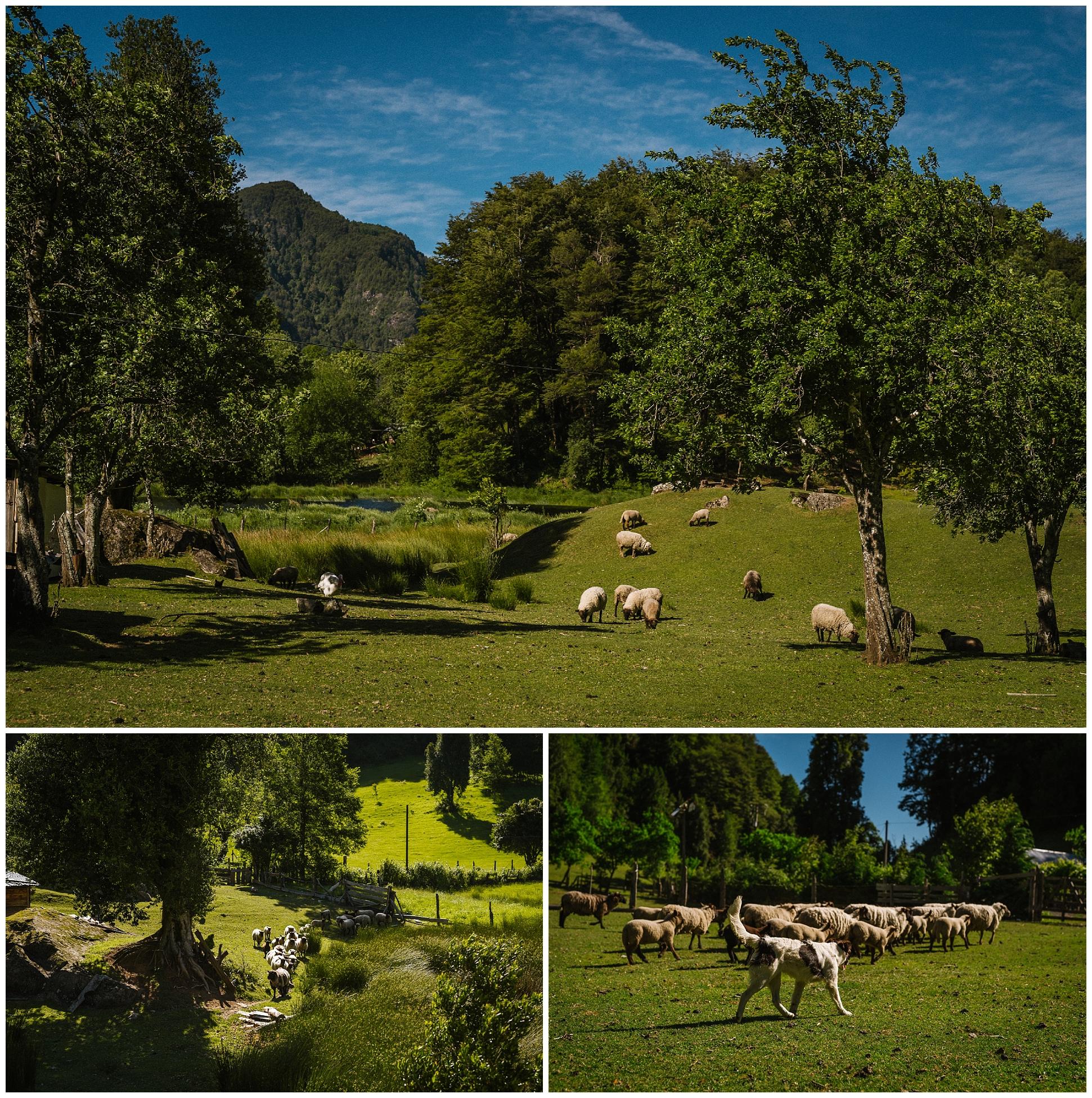 Cheilean-destination-adventure-wedding-florida-patagonia-pucon-santa-cruz-vsco_0034.jpg