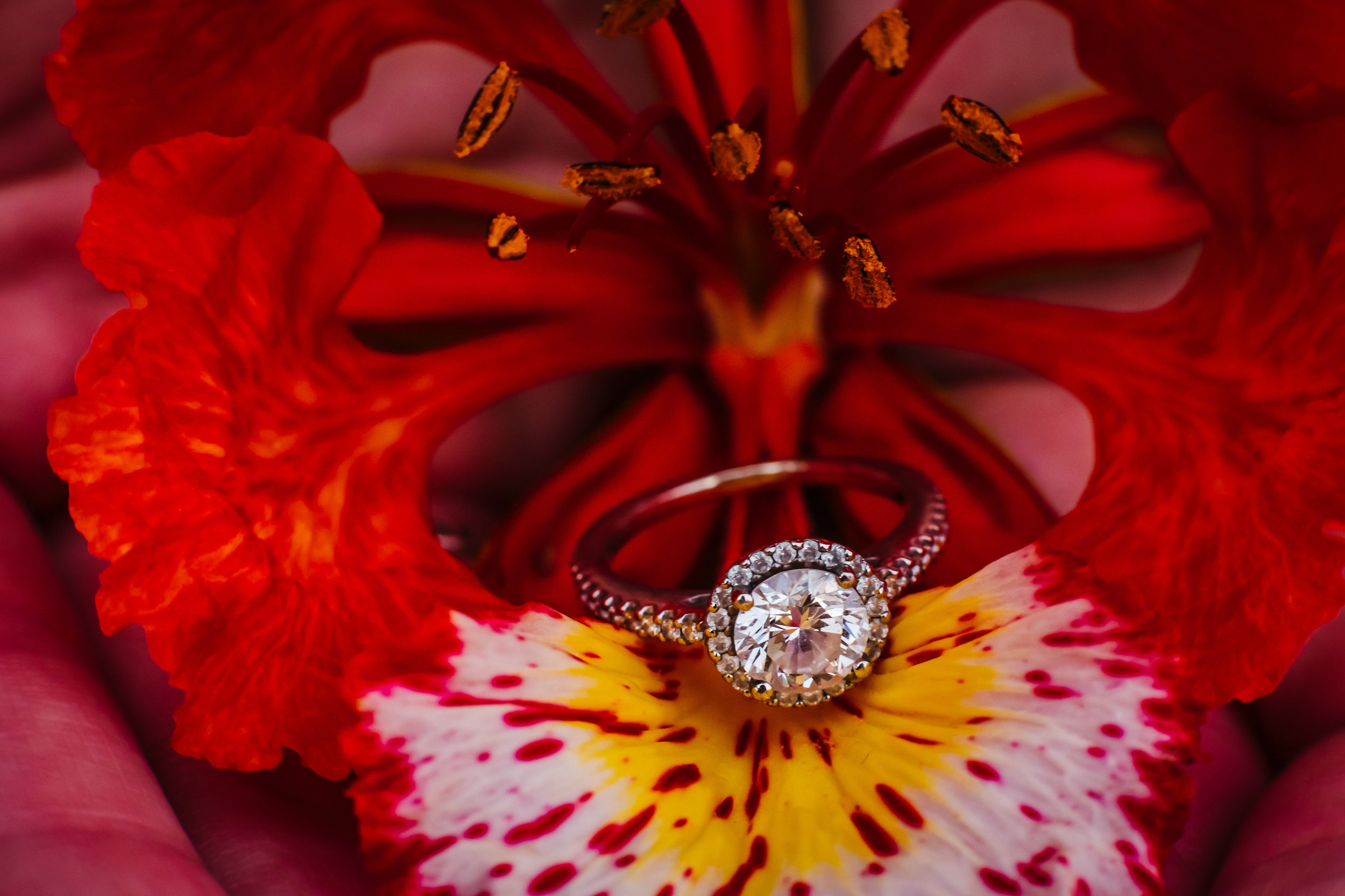 Tampa-Engagement-Photographer-Floral-Ring.jpg