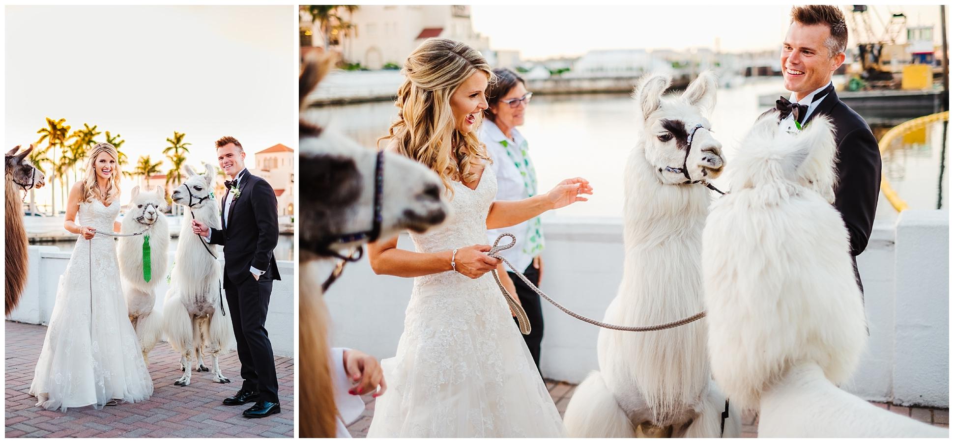 tampa-bradenton-wedding-photographer-south-florida-museum-classic-blush-gold-alpacas-sparklers_0077.jpg