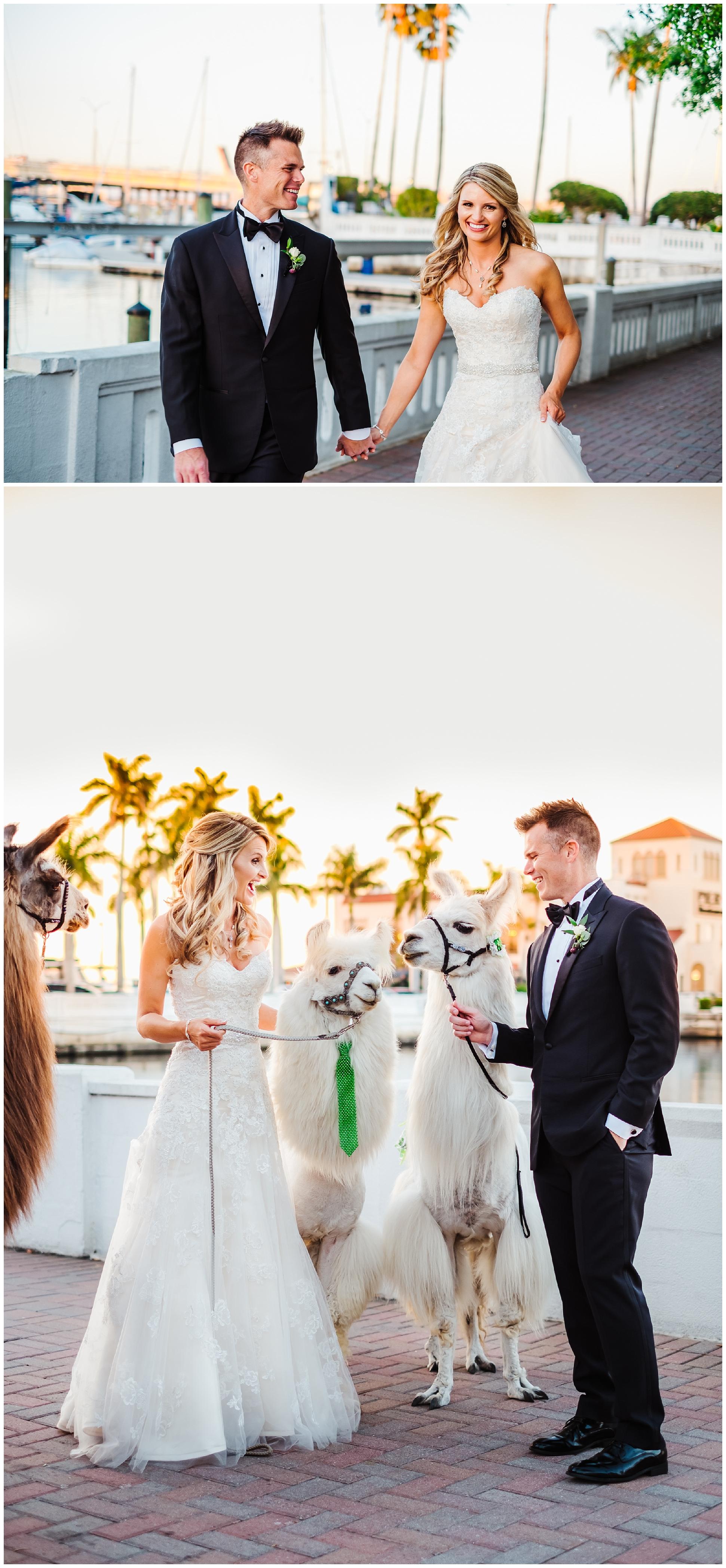 tampa-bradenton-wedding-photographer-south-florida-museum-classic-blush-gold-alpacas-sparklers_0076.jpg