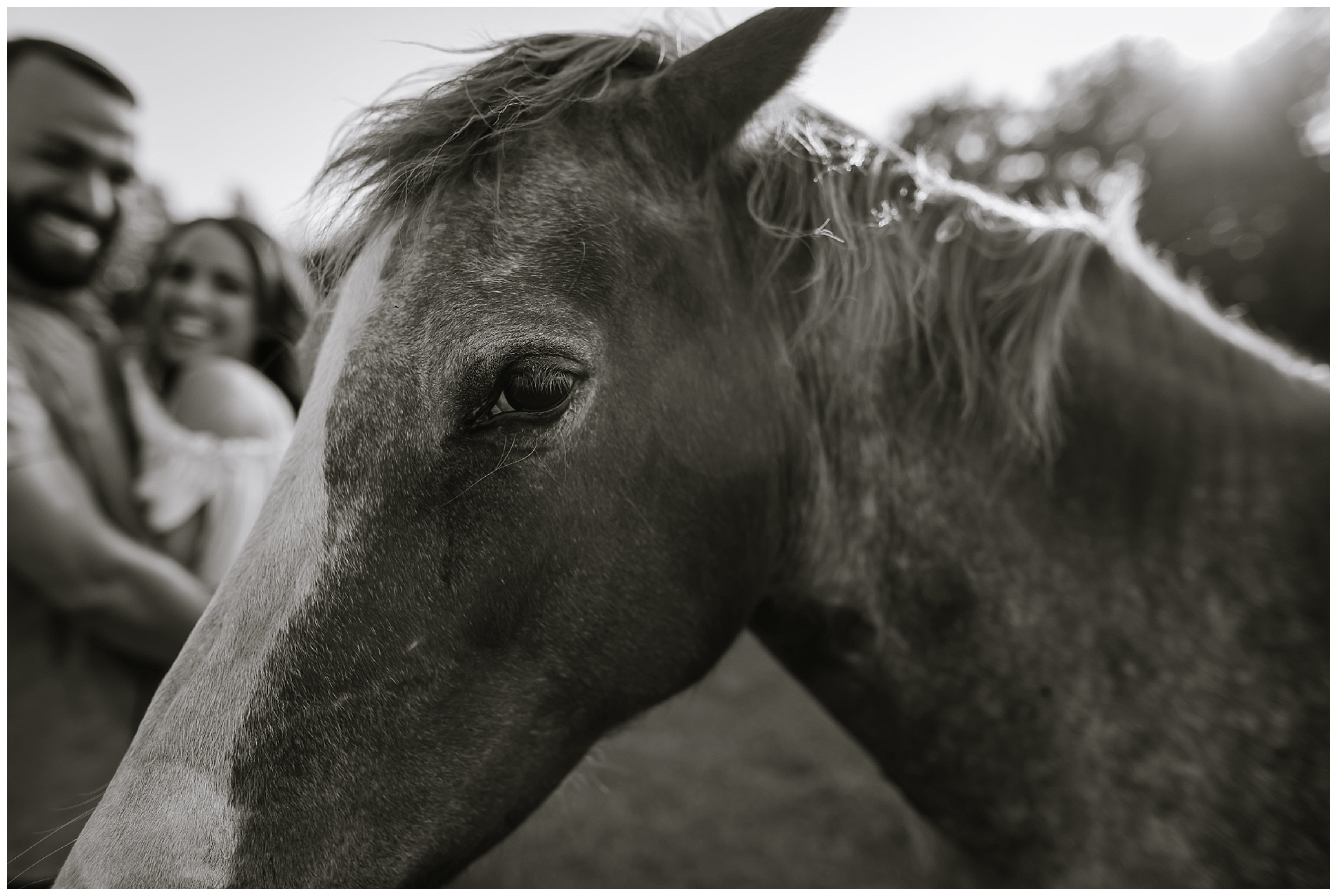 Tampa-sunset-horse-engagement session_0037.jpg