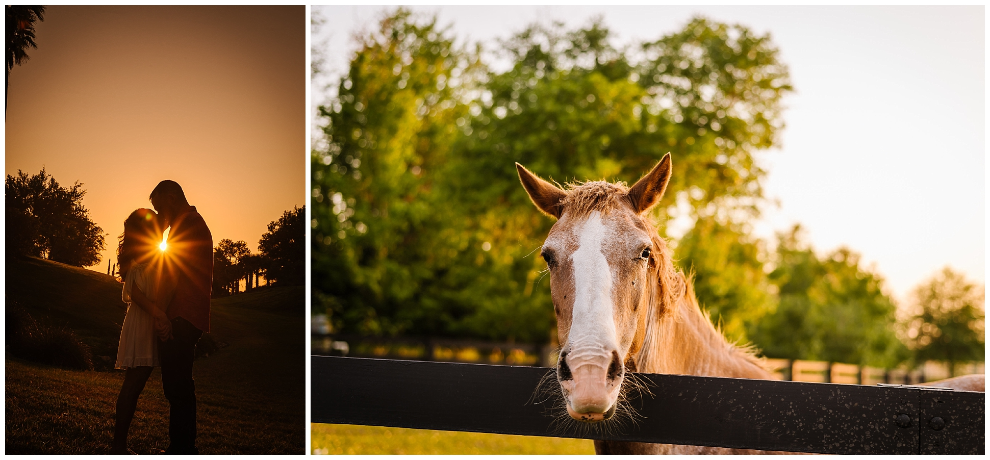 Tampa-sunset-horse-engagement session_0063.jpg