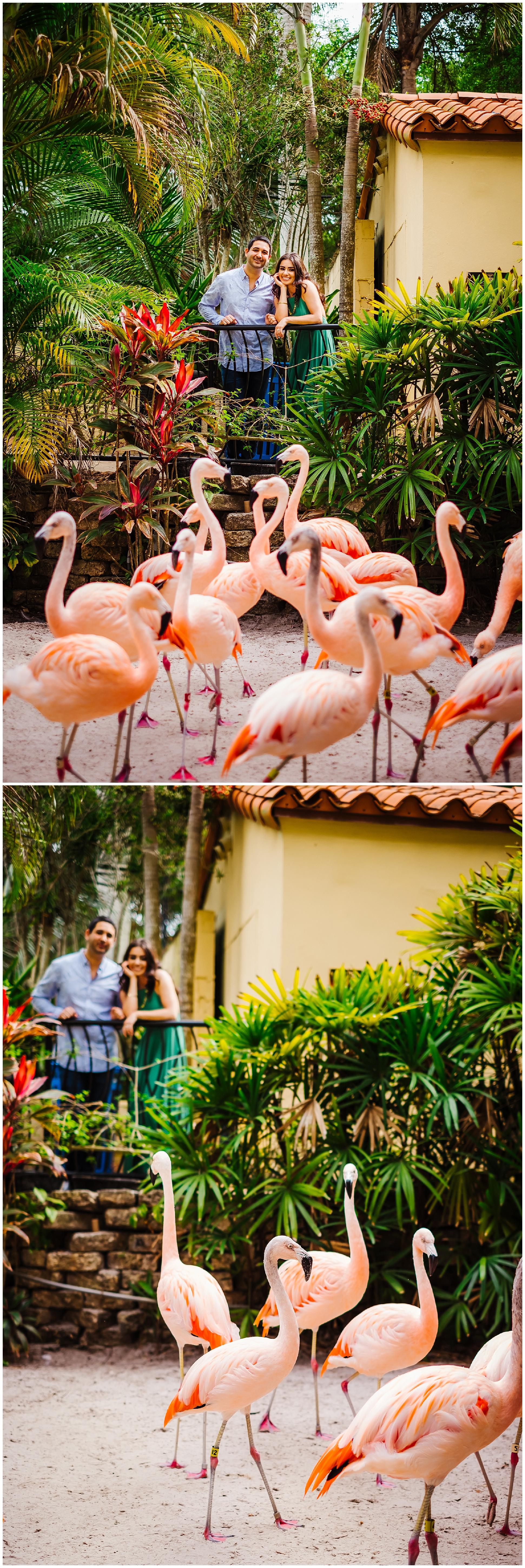 sunken-gardens-engagement-session-photos-teal-flamingos_0017.jpg