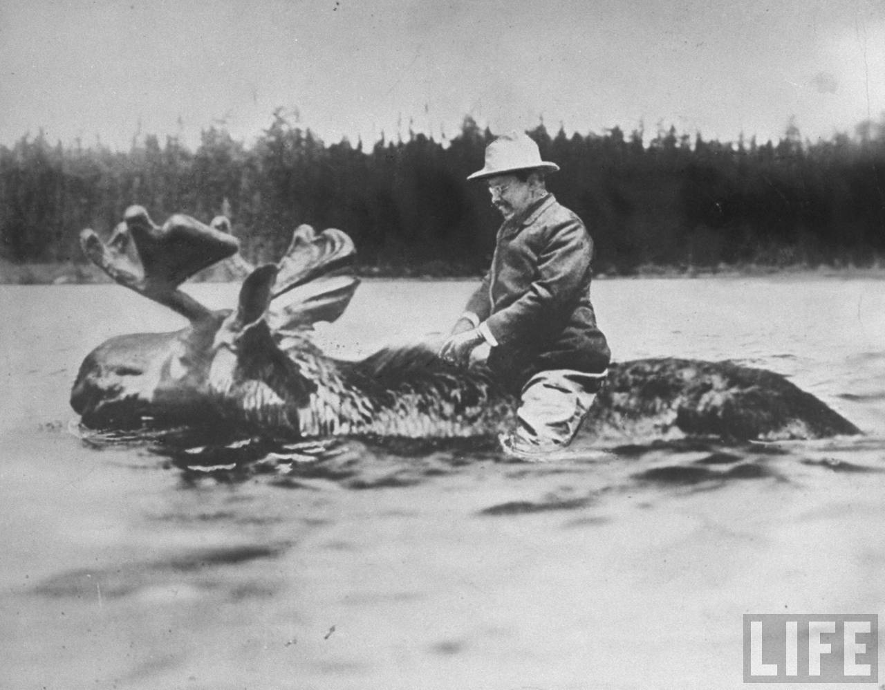 Theodore Roosevelt riding a moose.jpeg