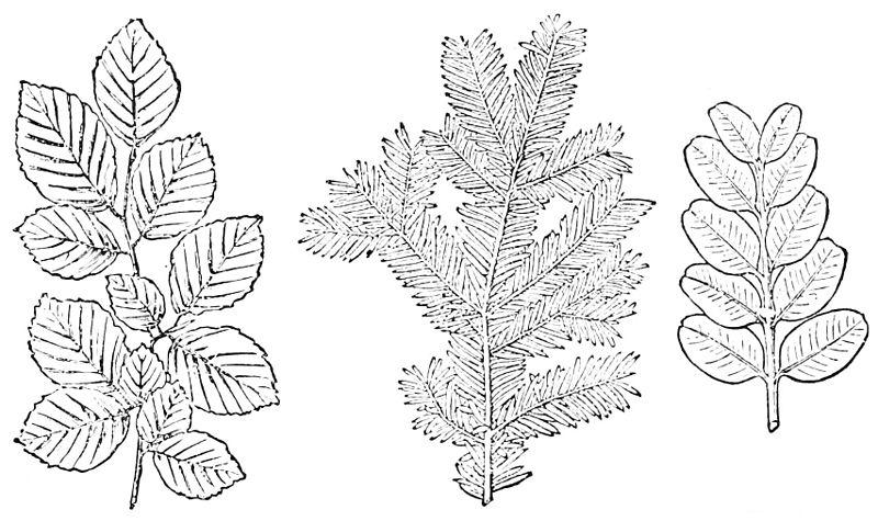 Step 3: Leaf Arrangement
