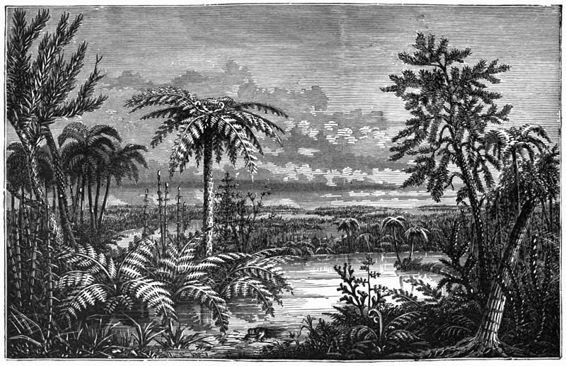 "An illustration of the Carboniferous landscape. ""Carboniferous Pteridophyta (After Dana)"" from the 1896 edition of  Underwood's Native Ferns and their Allies ."
