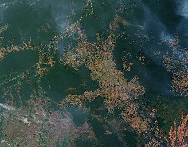 Refugia formation in the Amazon due to human deforestation.