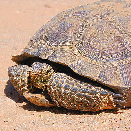 $15/monthadopts a tortoise