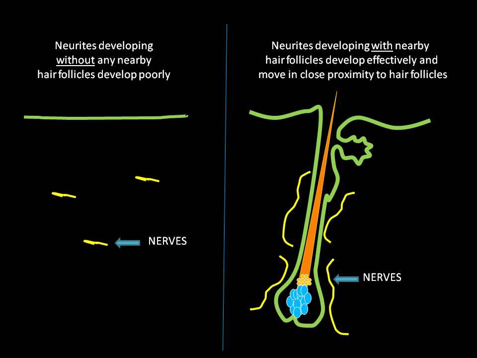 nerves.jpg