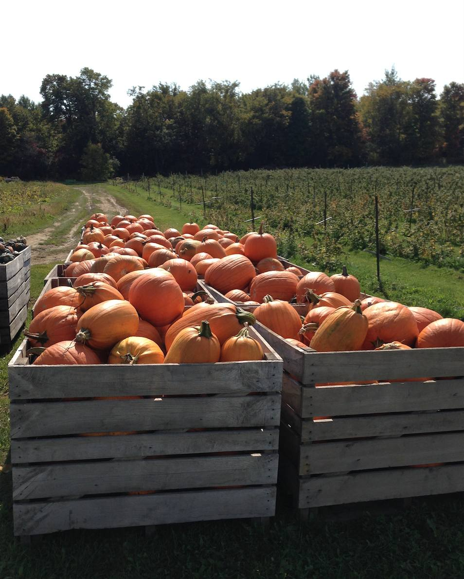 Reflections on pumpkin seed oil for hair loss during my recent visit to the pumpkin patch