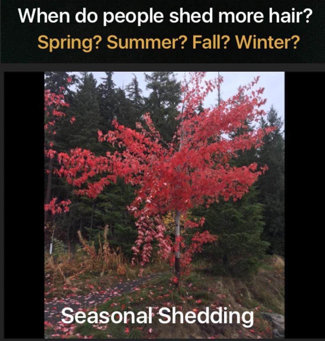 Seasonalshedding