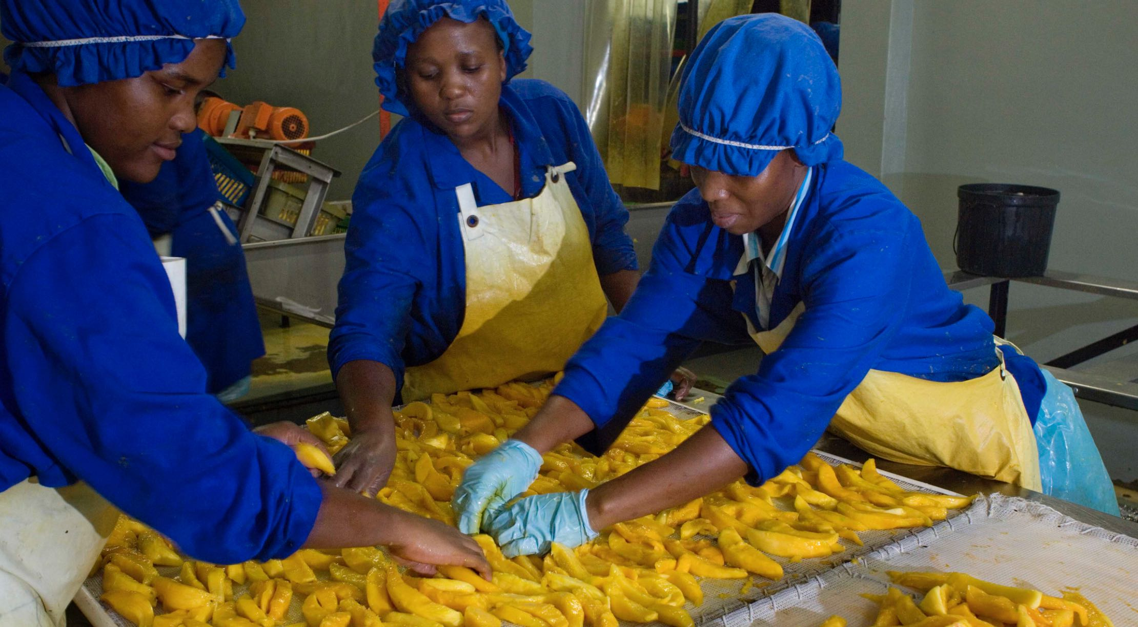 Food Production Entrepreneur : https://www.lionessesofafrica.com