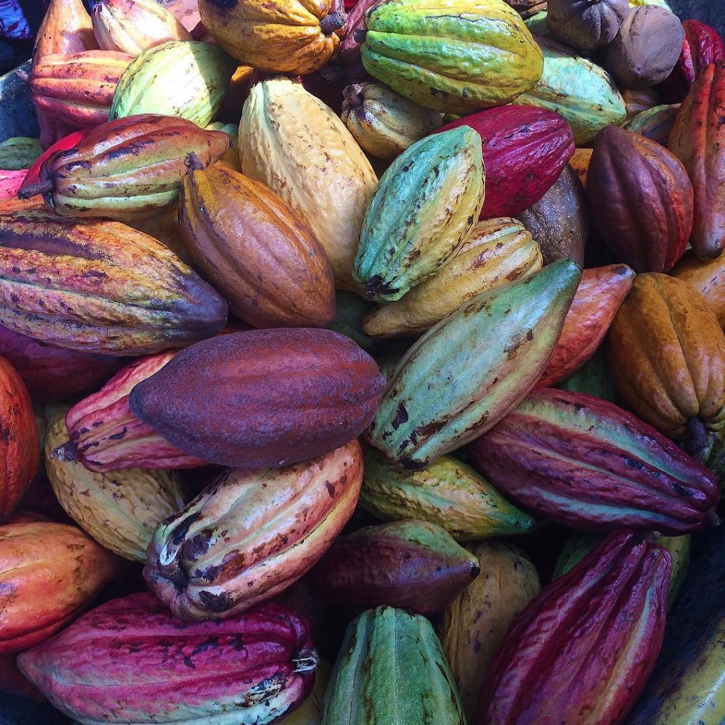 """Produced from the seed of the tropical Theobroma cacao tree,cocoa has been cultivated for at least three millennia. This food originated in Mexico, Central and Northern South America and dates back to around 1100 BC when the Aztecs made it into a beverage known as Nahuati or """"bitter water"""" in English. The chocolate-making process remained unchanged for hundreds of years. It wasn't until the Industrial Revolution, when mechanical mills were used to squeeze out cocoa butter which created durable chocolate that significant changes occurred."""