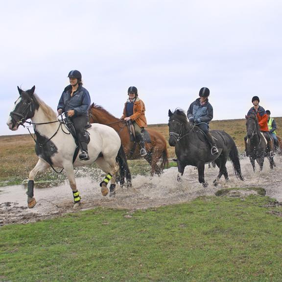 line of horses.jpg