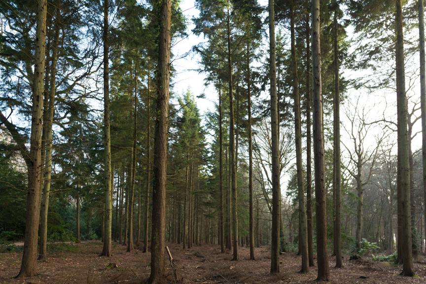 forest_walk_calshot.jpg