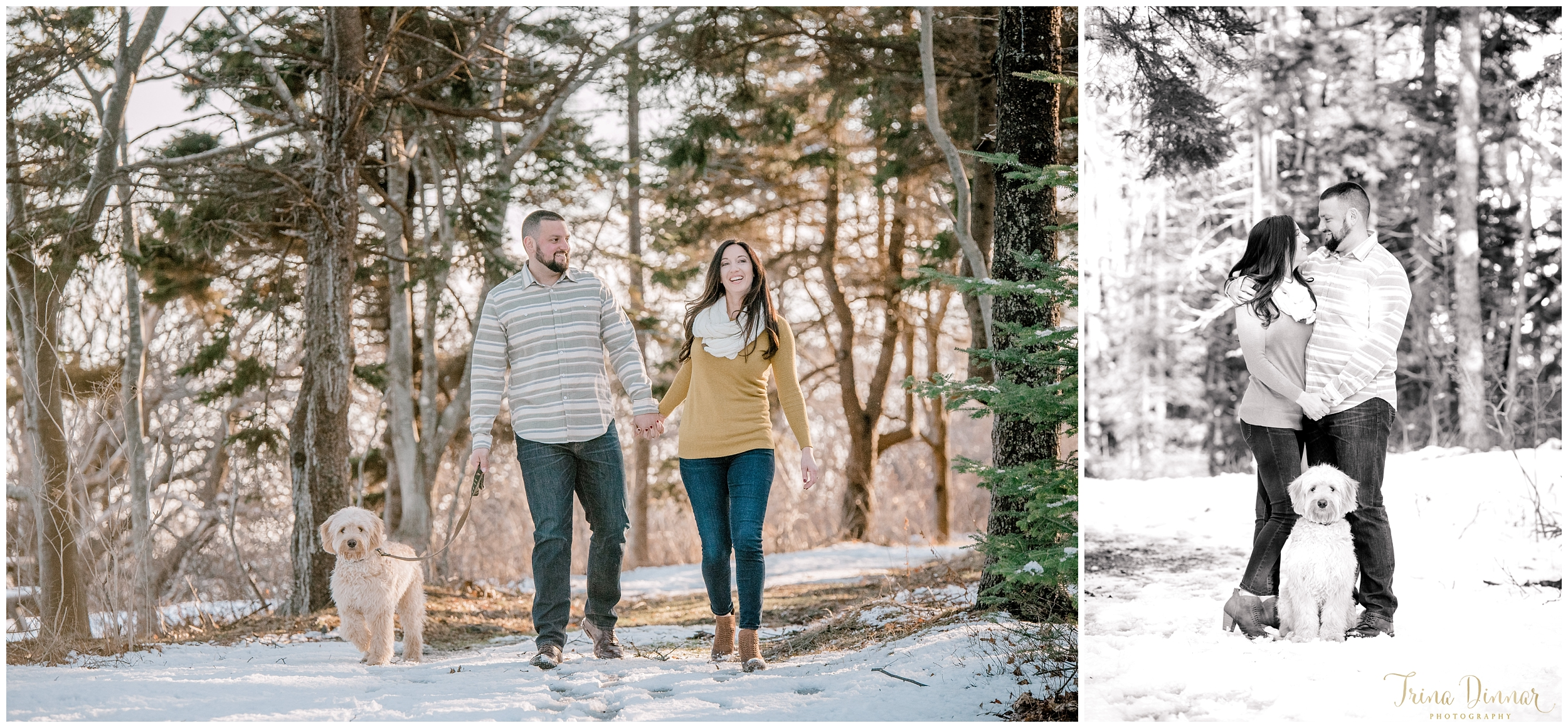 Engagement portraits in Maine with Goldendoodle.