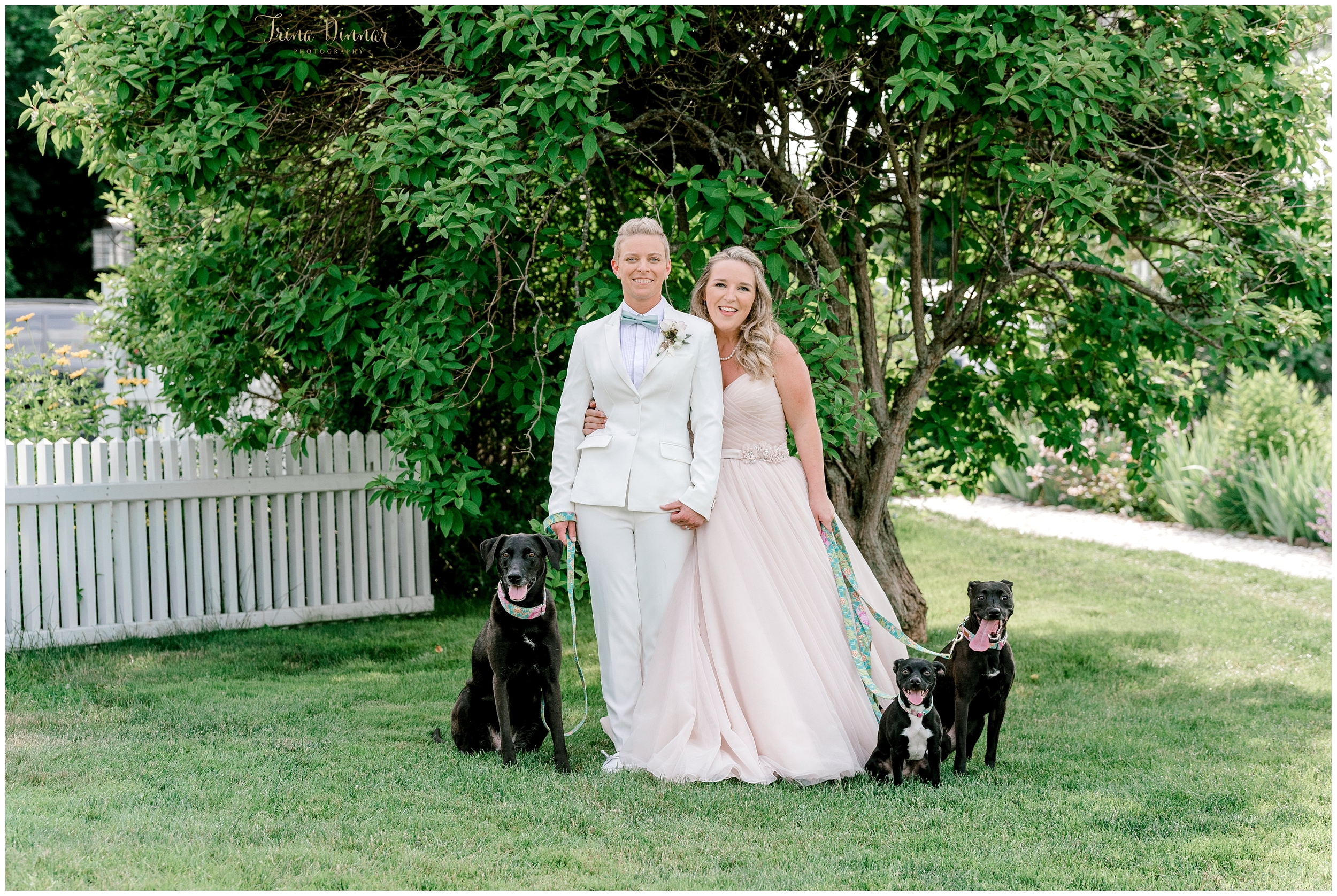 Two Brides Three Dogs