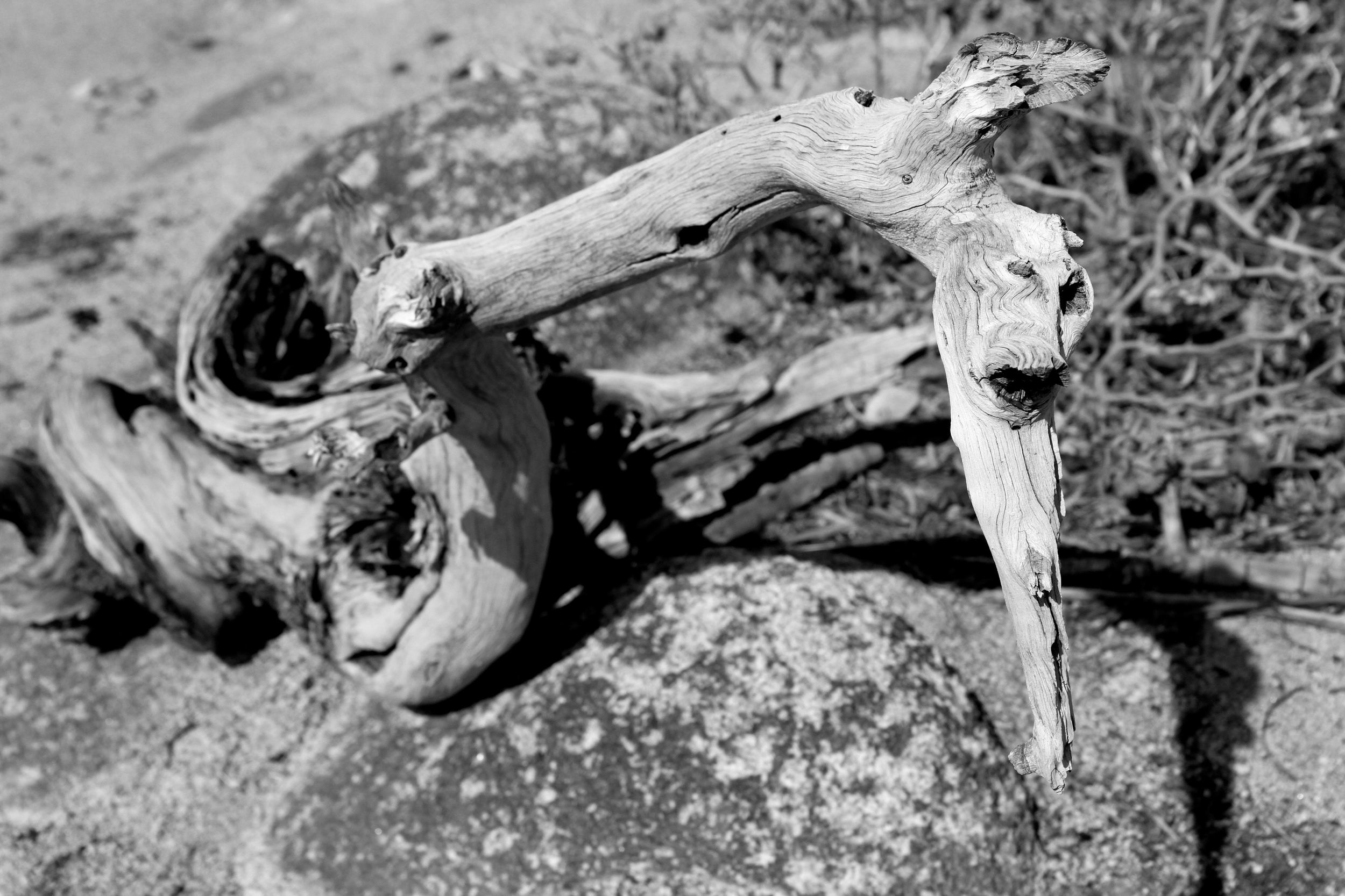 twisted joshua tree california.jpg