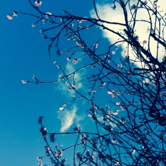 Spring+Equinox Ritual.jpeg
