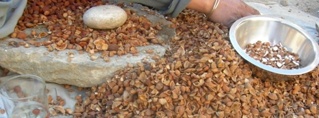 The stone is tapped over a pile of pits, to open several at once. Shells and nuts are then sorted, broken nuts go in one bowl, and whole ones in another.