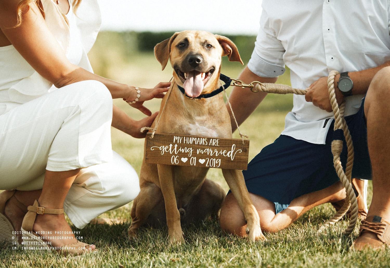 Top Windsor Ontario Wedding Engagement Photographers