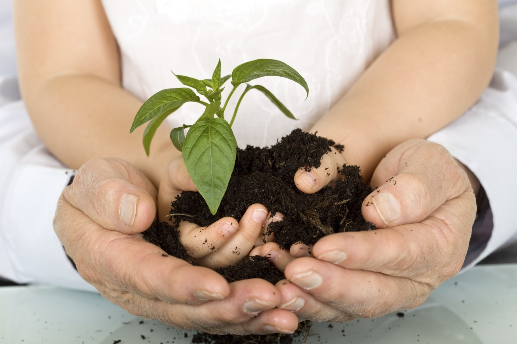 King Academy child and adult hands with seeding.jpg
