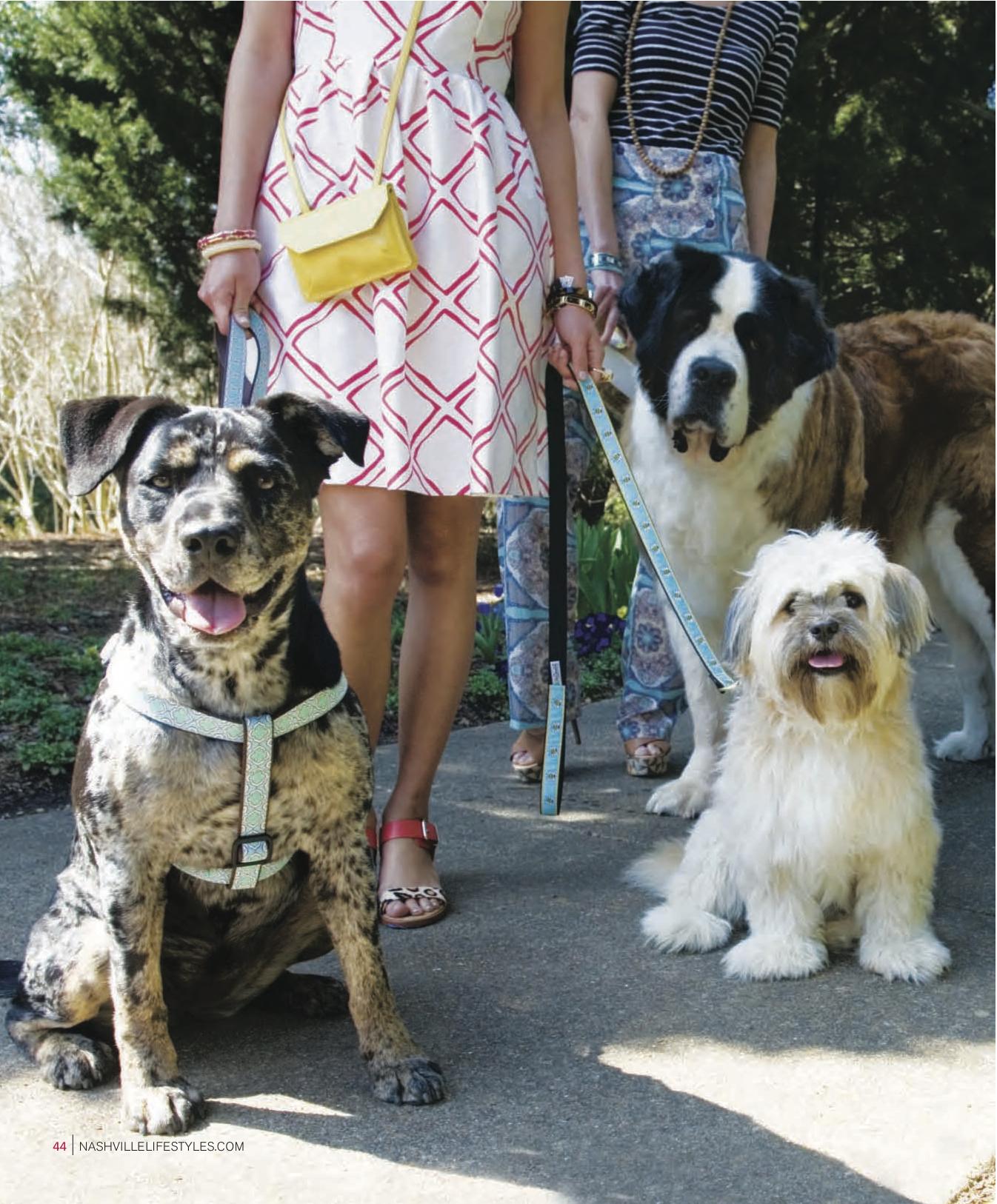 Dog Fashion5.jpg