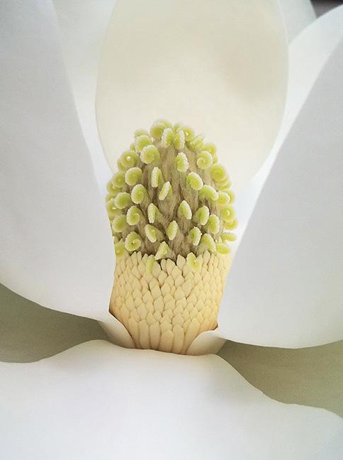 Bloom-2a.jpg