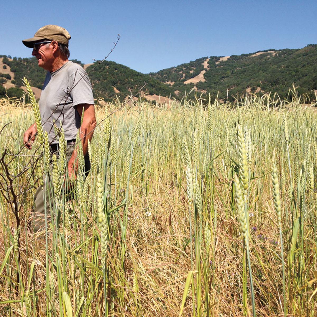 Mendocino-Grain-Project-900x900.jpg