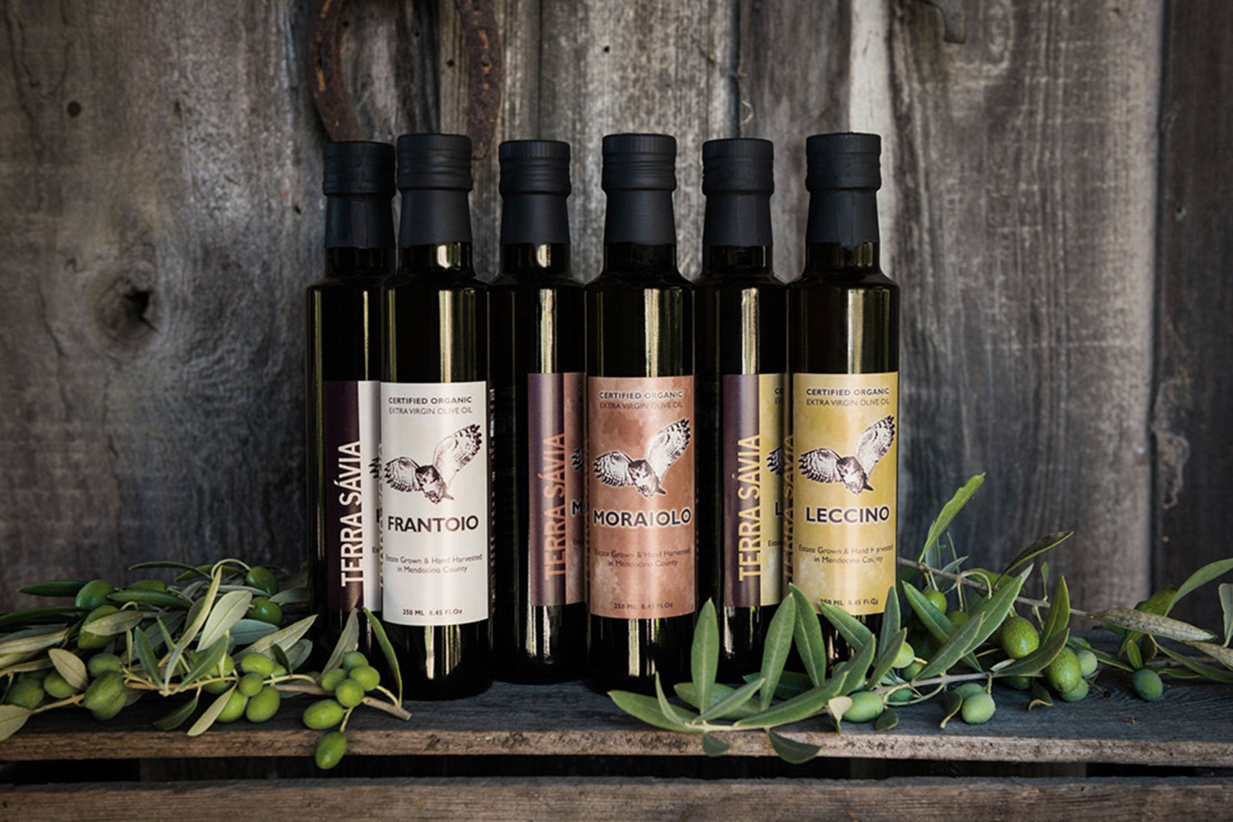 frantoio-moraiolo-leccino-oil-bottles.jpg